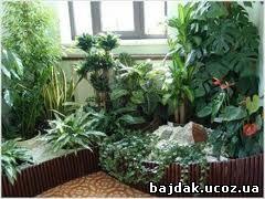 Комнатные растения, которые исцеляют организм.